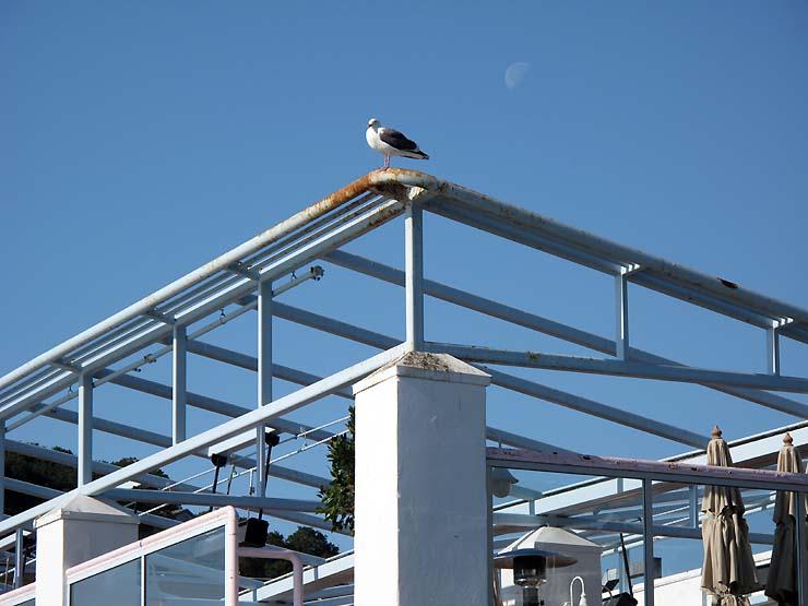 Typepad-18nov08-seagull