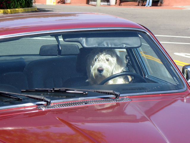 Dog in jag ONE