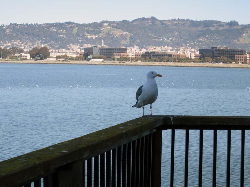 Seagull-EMY-UCBbackground