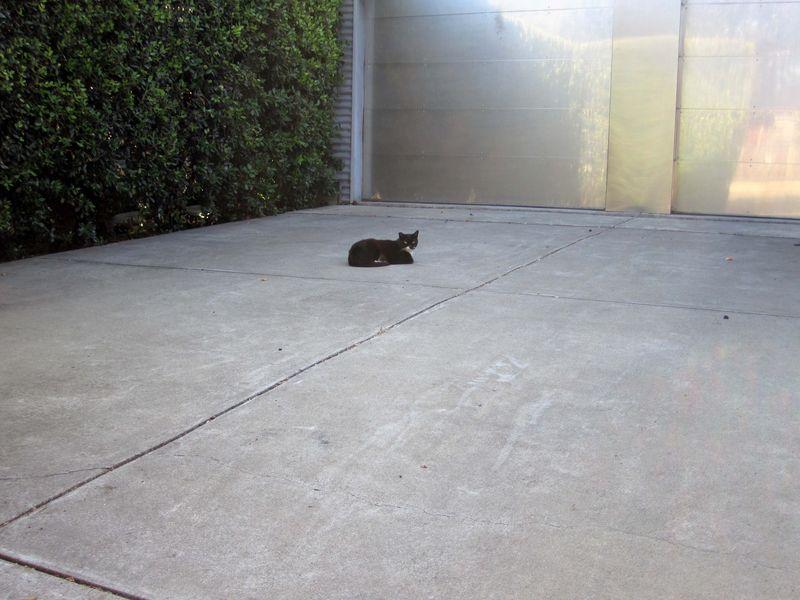 Cat 0334