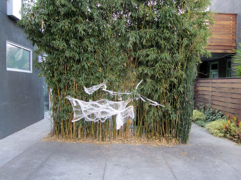 Halloween cobweb bamboo 8th street near parker BRK