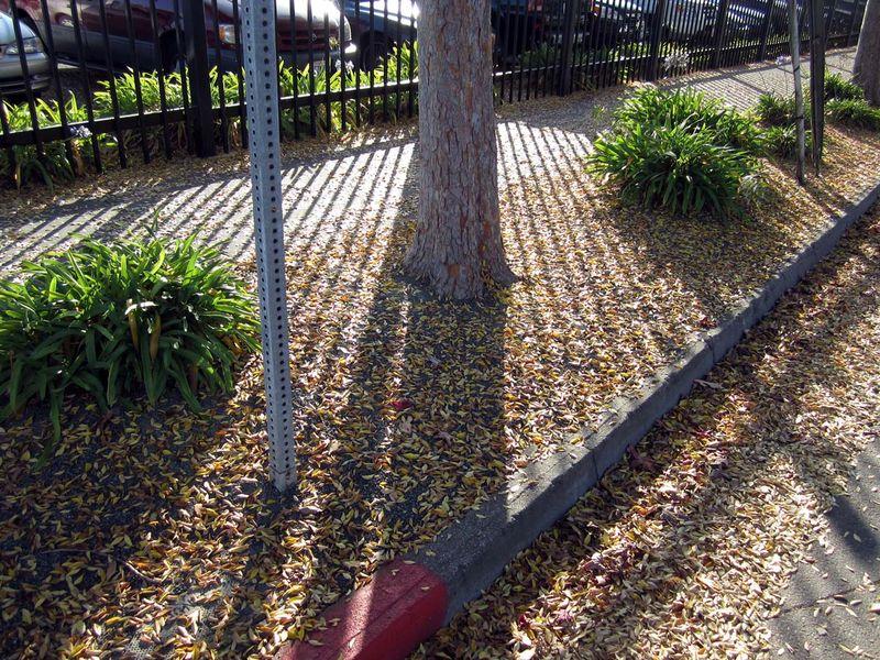 TreeShadows