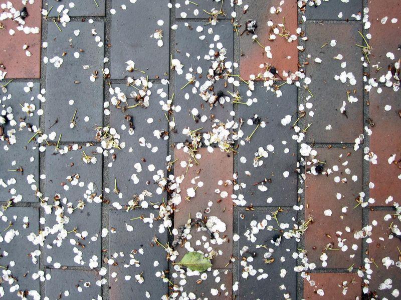 Bricksidewalkflowers