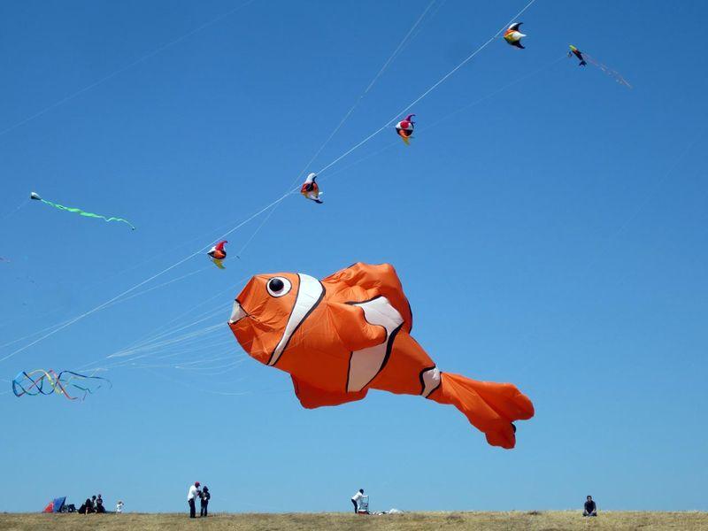 Fish kite BRK