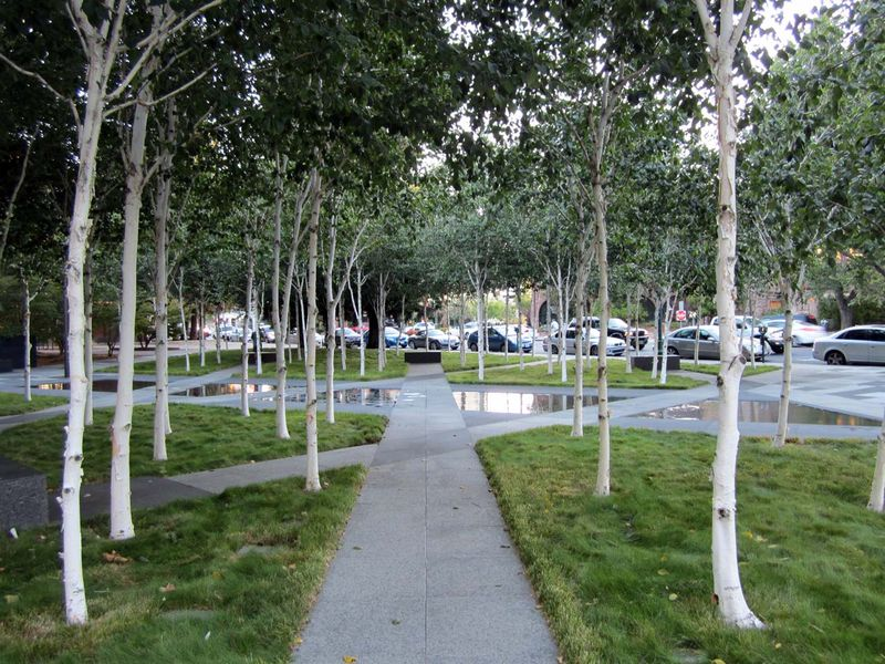 Trees And Pools at Veterans Memorial Plaza - photo by Max Clarke