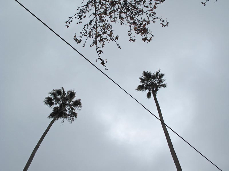 Palm Trees © photo by Max Clarke