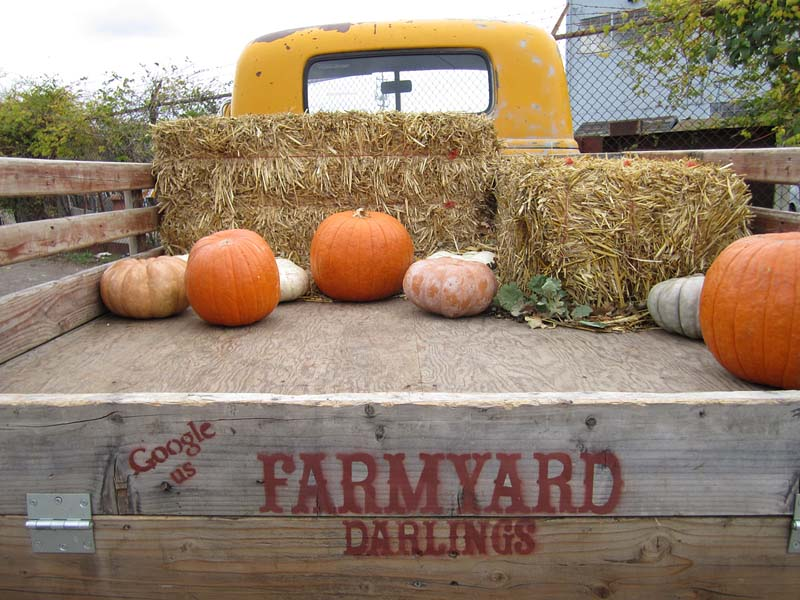Farmyard Darlings Truck - photo by Max Clarke