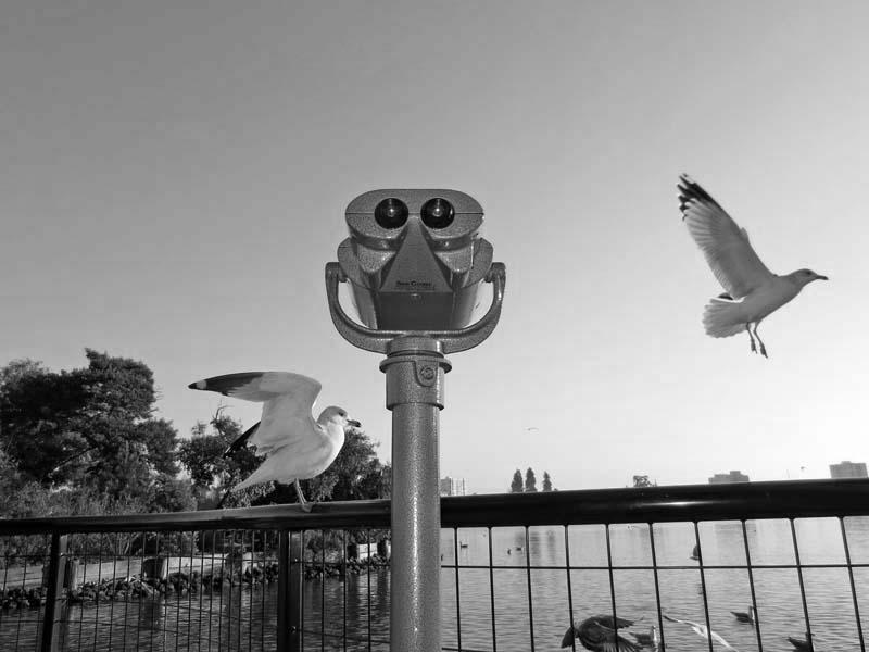 Seagulls -BW- photo by Max Clarke