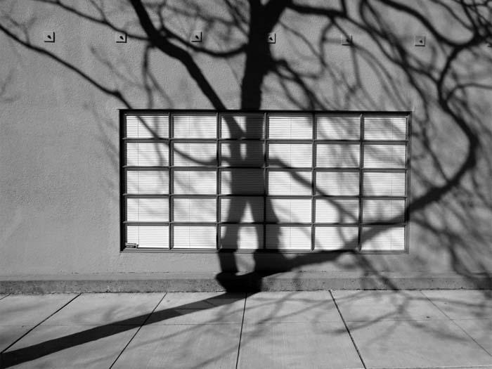 Tree Shadows On Windows, Berkeley-©-photo by Max Clarke