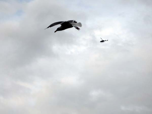 Helicopter and Seagull-©-photo by Max Clarke