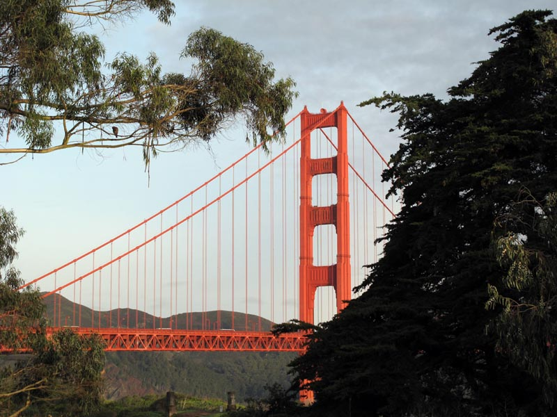 Golden Gate Bridge and trees © photo by Max Clarke