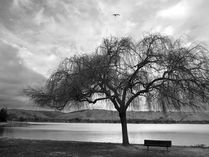 Lake Elizabeth, Fremont-©-photo by Max Clarke