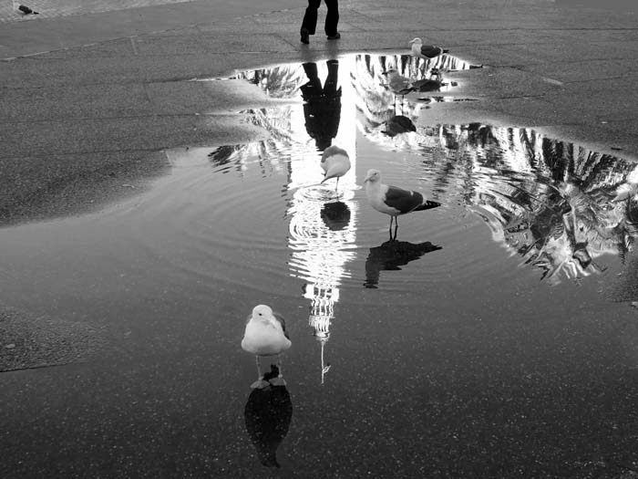 Ferry Buiilding Tower in Puddle, San Francisco-©-photo by Max Clarke