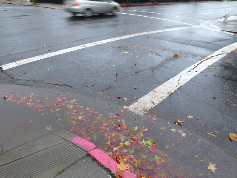 Wet Street and Autumn Leaves - photo by Max Clarke