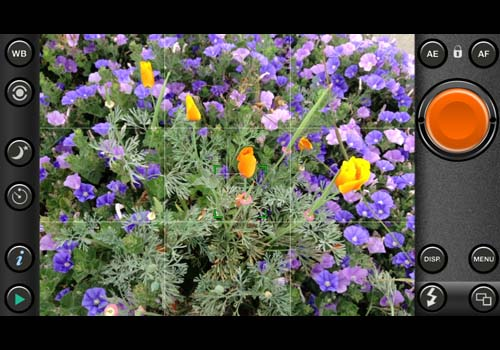 Poppies and Purple Flowers-©-photo by Max Clarke