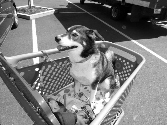 Dog Going Shopping-©-photo by Max Clarke