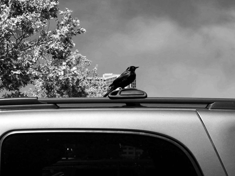 Bird Watches Me-©-photo by Max Clarke