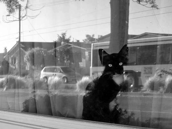 Cat In The Window-©-photo by Max Clarke