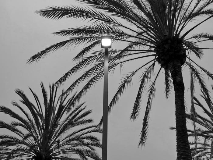 Lamp and Palm Trees -©- photo by Max Clarke