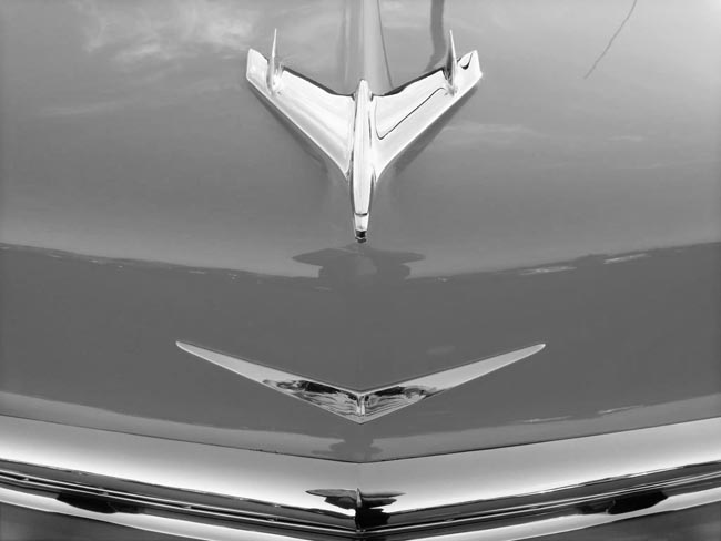 Chrome Bird -©- photo by Max Clarke