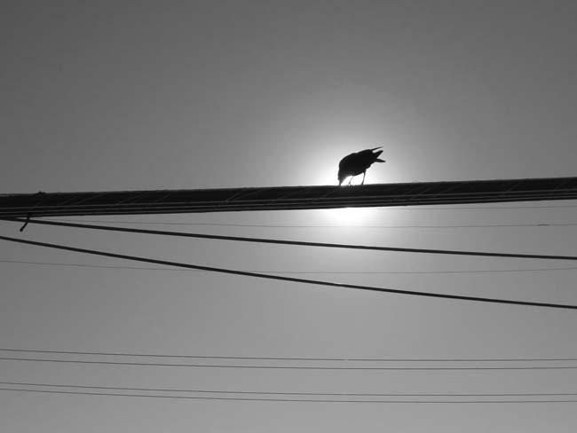 Bird In The Sun -©- photo by Max Clarke