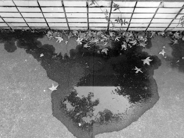 Puddle © photo by Max Clarke
