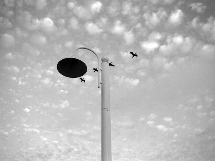 Birds Above the Lamp Post © Max Clarke