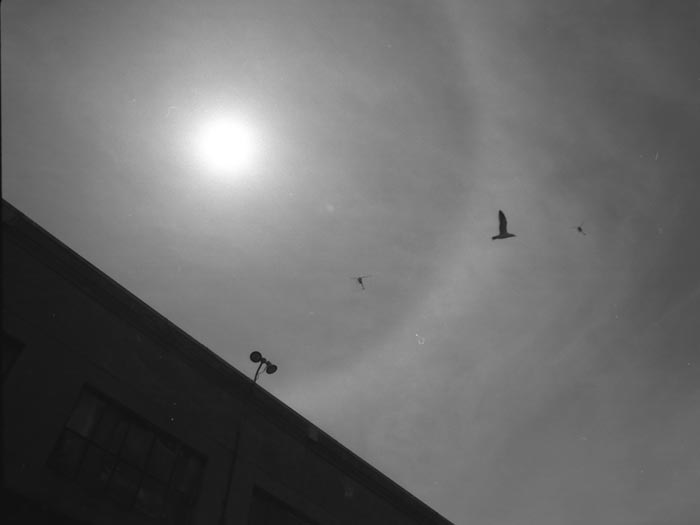 Bird-and-helicopters-near-the-sun---max-clarke