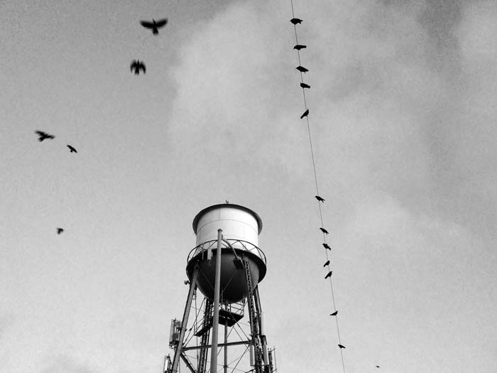 Crows Near the Water Tower - by Max Clarke