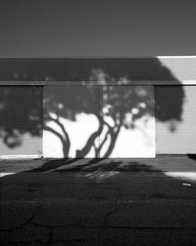 Berkeley Tree Shadows - Max Clarke