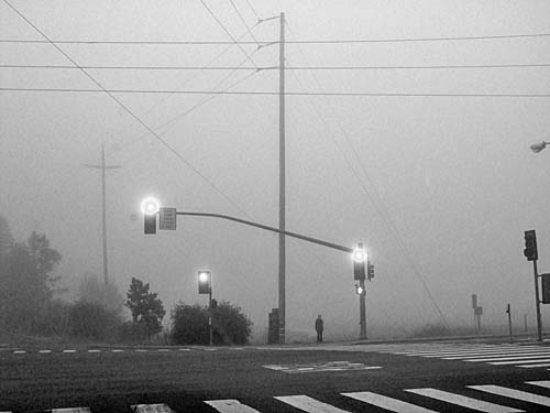 Mill Valley Fog - photo by Max Clarke