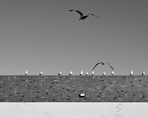 Boxing Day Birds 2015 © Max Clarke