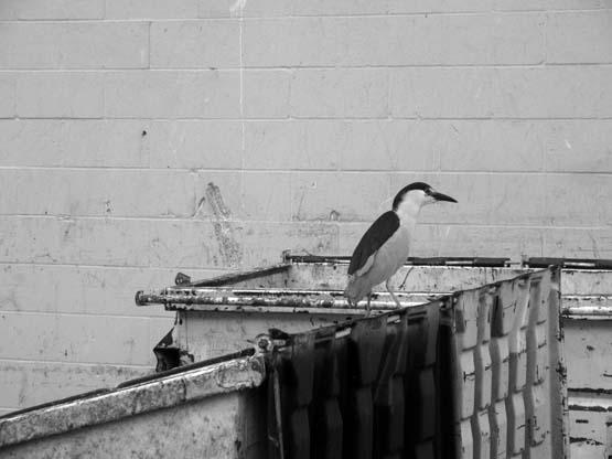 Dumpster Diver - Max Clarke