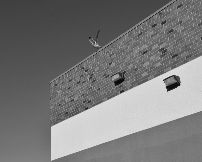5 Seagull Leaves the Roof - Max Clarke