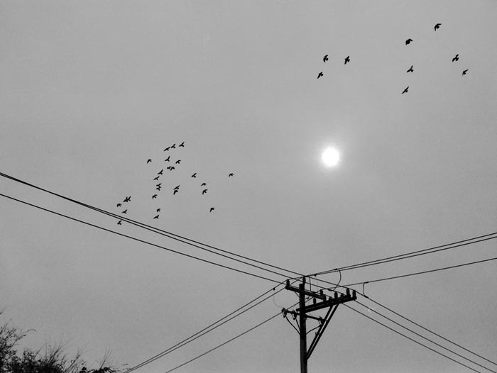 Sun-and-birds-and-telephone-pole---max-clarke