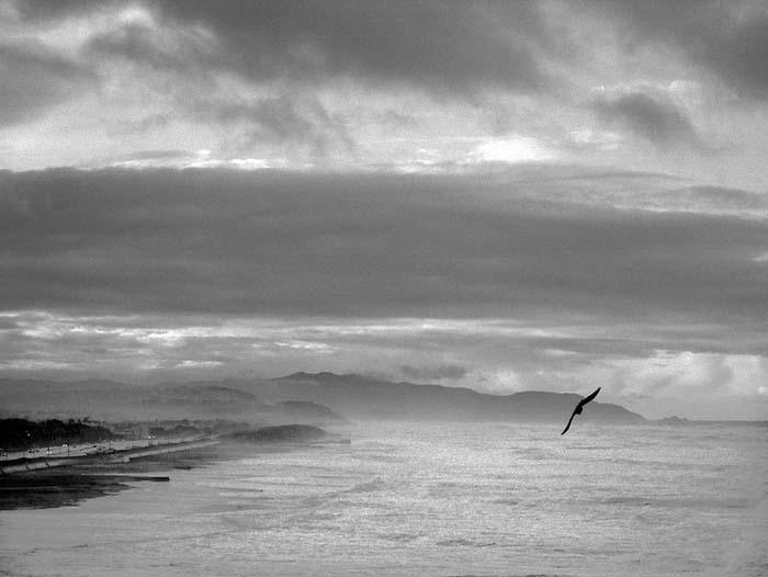 Bird Above Ocean Beach © Max Clarke