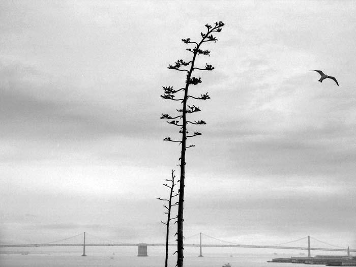 The View From Alcatraz © Max Clarke