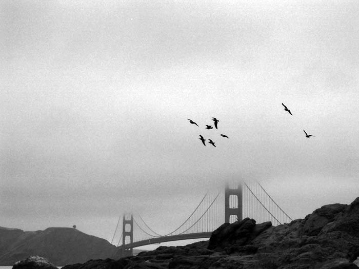 Birds and the Golden Gate Bridge © Max Clarke