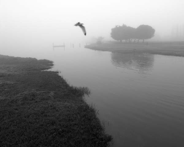 Foggy Feathers © photo by Max Clarke