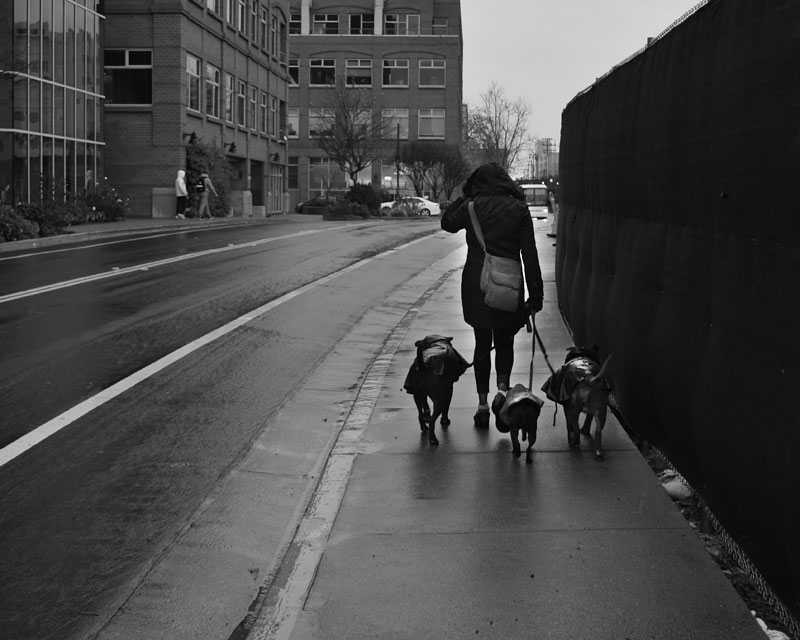 47---Woman-Walking-Dogs-in-the-Rain---Max-Clarke