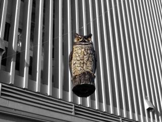 OWL-FIGURINE-RESTAURANT-max-clarke