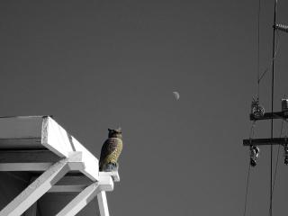 ROOF-OWL-FIGURINE-max-clarke
