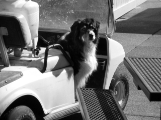 GOLF-CART-DOG---max-clarke
