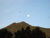 Mt_tam_moon_bird