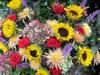 Flowersclose_2