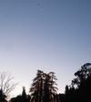Typepadvenusbirdtree